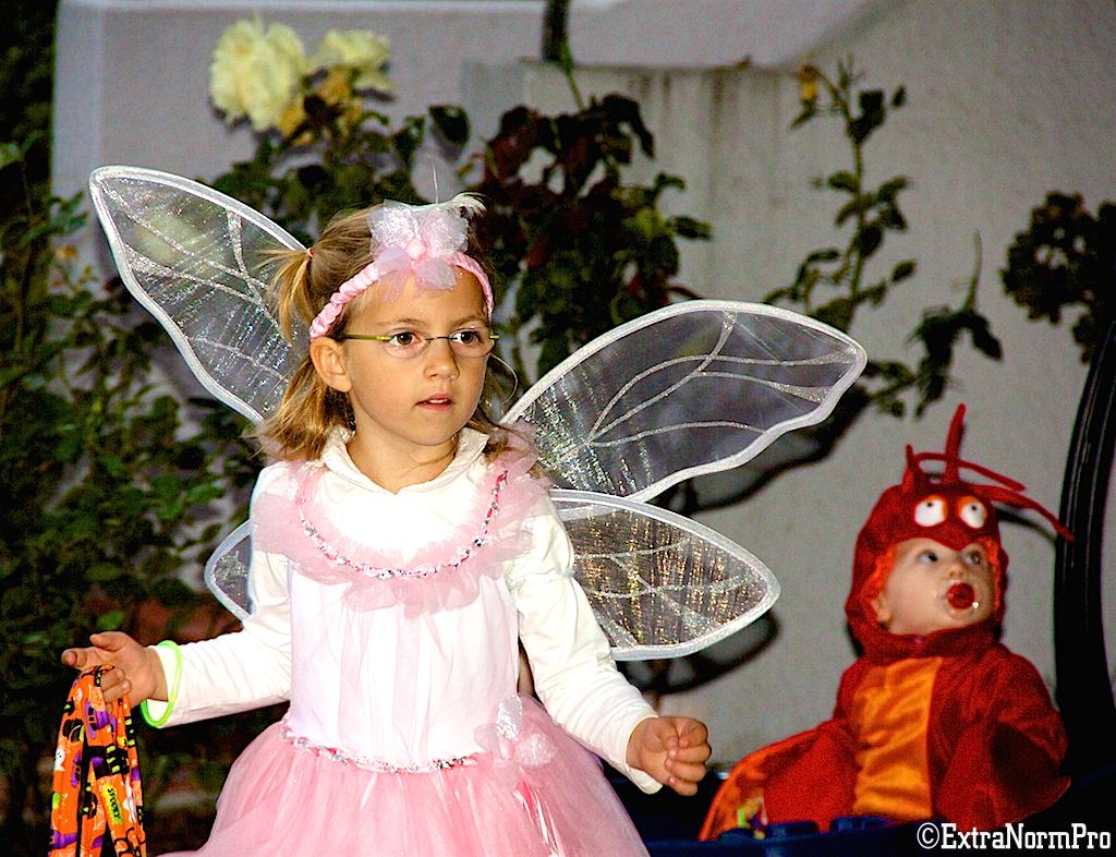Бабочка или стрекоза?