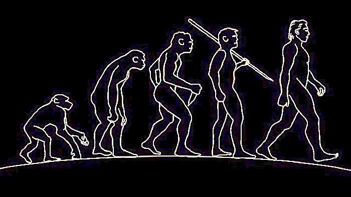 антропология стросса